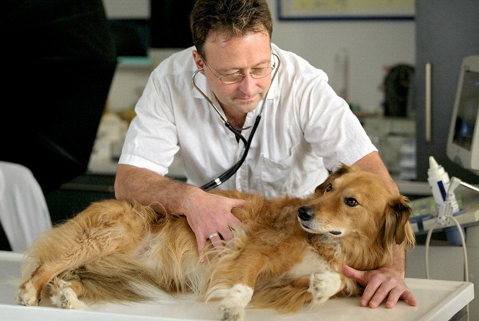 tierarztpraxis mag. bauer