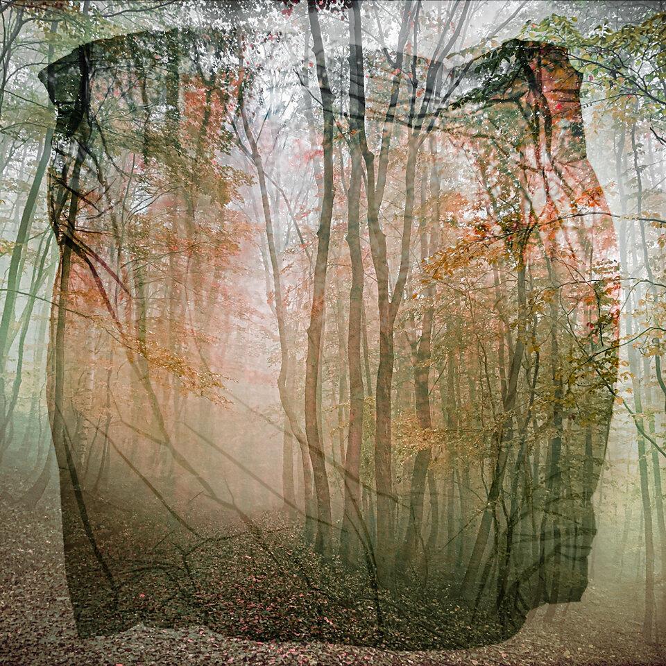 Woods of Fantasy